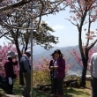 平成30年4月例会登山兼花見 「神の倉山」