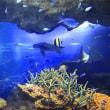 京都水族館 kyoto Aquarium グランドオープンしました