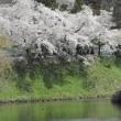 ツアーで福島の桜を見に行きました。(3)大夫桜、飯盛山、さざえ堂、鶴ヶ城