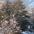 朝から雪降りです。朝から雪かきです!