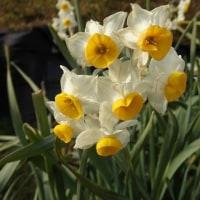 周防大島で出会った花