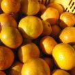 今年の柑橘
