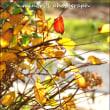 花フェスタ 秋風景