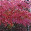 紅葉の名所、永源寺
