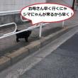 ぽん太山に一緒に散歩に行くはずが・・・(@_@;)