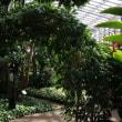 海洋博公園 熱帯ドリームセンター2