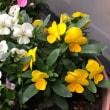 可愛いいお花たち