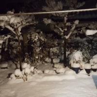 今年最初の降雪