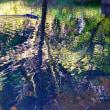 水鏡への挑戦 その3  自然教育園セレクション
