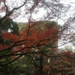 「災」とリーガロイヤルの紅葉