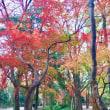 今年最後の紅葉狩りに糺の森へ、、、、