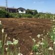 【台風21号が過ぎ去り〜秋冬野菜の種まき開始✨】