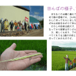 田んぼの様子7月編
