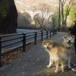 こゆこじと行く中山道宿場町の旅 十五日目 「お家へ一路も中山道の旅」