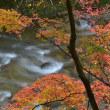 「清流秋彩」 いわき 夏井川渓谷にて撮影! 紅葉と渓流