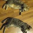 本日休業/猫をダメにするスペース