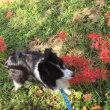 綺麗な彼岸花とのんびりサギさんと青空に火の鳥〜☆