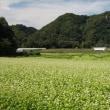 牧野のそば畑