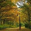 初冬の長池公園
