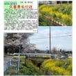 花巡り 「桜-その419」 久喜青毛付近