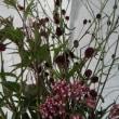 花盛り143