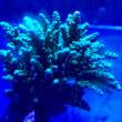 サンゴ新入荷
