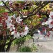 ぺんぺん草の庭の春