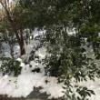 今朝の東京はアイス。かき氷