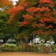 情熱・献身 秋のバラ園