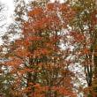 紅葉を求めて 秋山郷