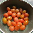 今日の収穫(トマト・ヤーコン・白菜)と頂き物(柚子)