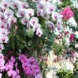 花絵巻き 牧野植物園