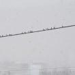 雪の月曜日