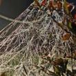 10月13日 クモの巣のシャンデリア