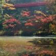 泉自然公園の紅葉 2018