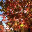 神奈川県の紅葉ベスト3!