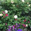 5月の花壇