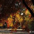 平成29年11月15日(水) 自然園の紅葉♪