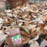 秋の庭仕事