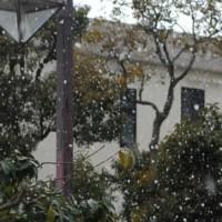 雪が降る!!