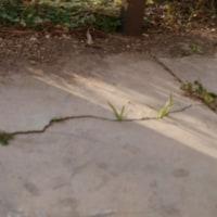 コンクリート地の割れ