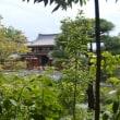 寺院宇治0513  平等院