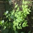 熊本の植物