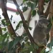 コアラは意外と早く動く!(こども動物自然公園・その2)
