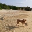 愛犬とぶらり散歩