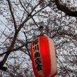 北国青森の桜は?(No.6)