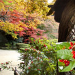 花彩々   紅葉・・古刹の庭先