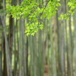 山田池公園・春 (5)