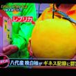 10/16 最初のPR地点 ギネスにも認定された晩白柚