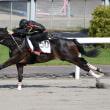 【HBAトレーニングセール2019(5/21開催)】の上場馬申込受付スタート!